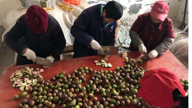 四川阆中黄金-----高温热泵烘干系统在果品无花果烘干中的应用