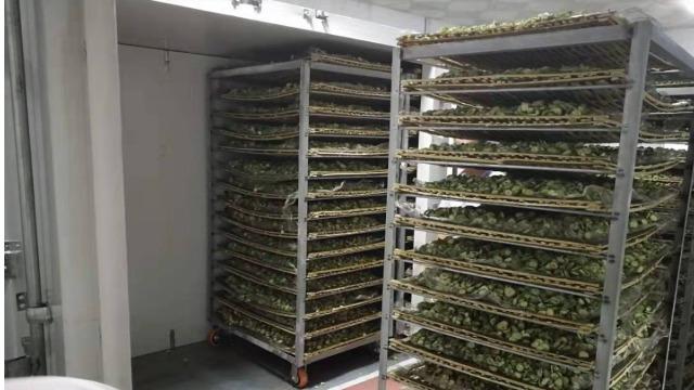 福建龙岩镇海------高温热泵烘干系统在蔬菜苦瓜干烘干中的应用